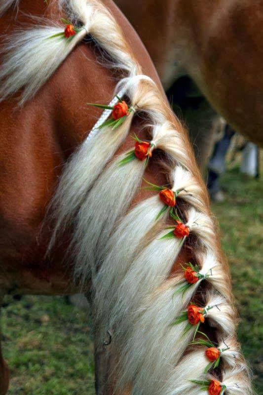 Cool Hairstyles For Horses  XciteFunnet