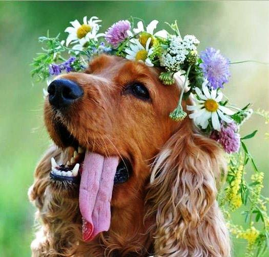 Funny Animal Wallpapers With Quotes Animals With Crown Of Flowers Xcitefun Net