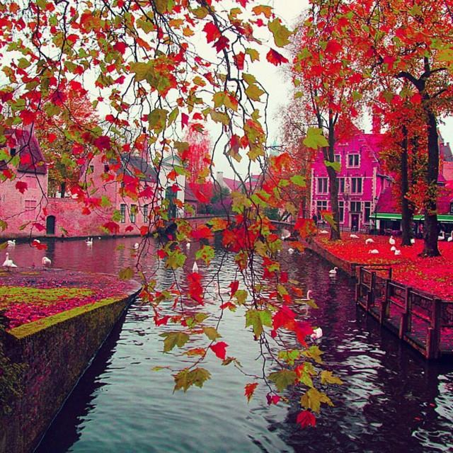 Cute Pink Wallpapers For Android Colorful Brugge Belgium Spring Visit Xcitefun Net