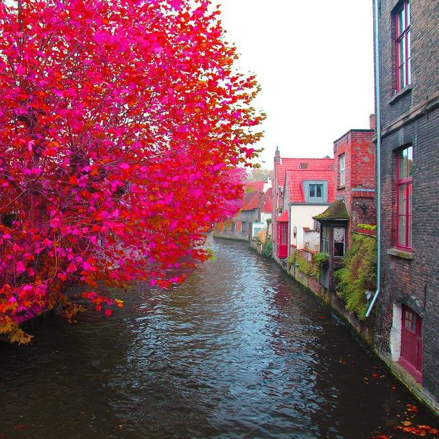 Cool Fall Wallpapers For Desktop Colorful Brugge Belgium Spring Visit Xcitefun Net