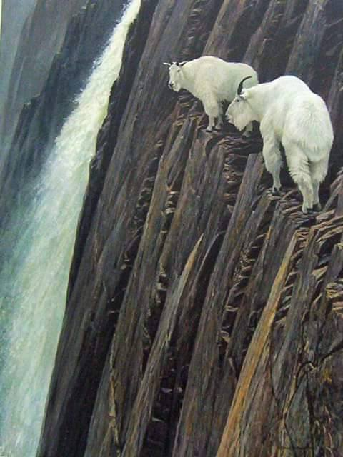 Cute Funny Wallpapers For Mobile Amazing Rock Climbing Skills Of Goats Xcitefun Net