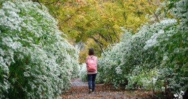 新社賞花景點︳沐心泉休閒農場一年四季皆有繁花盛開,中部賞金針花海最佳景點