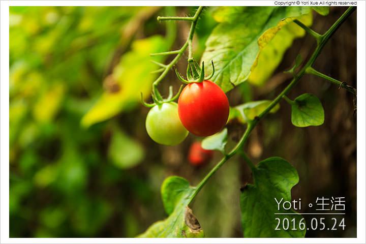 [花蓮壽豐] 江玉寶有機農場   無毒農業國宴食材, 有機蔬果現摘現吃〈體驗邀約〉