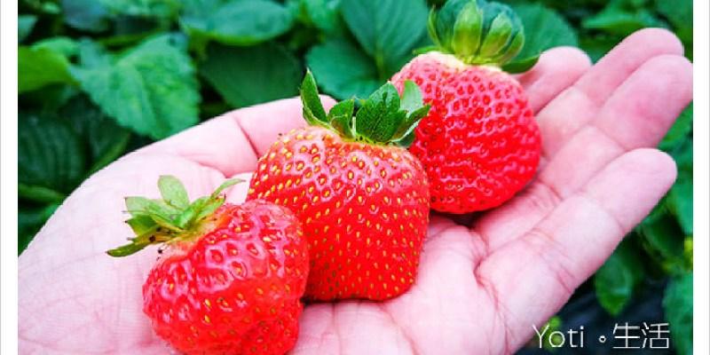 [花蓮鳳林] 開心草莓園   站著就可以採草莓囉!