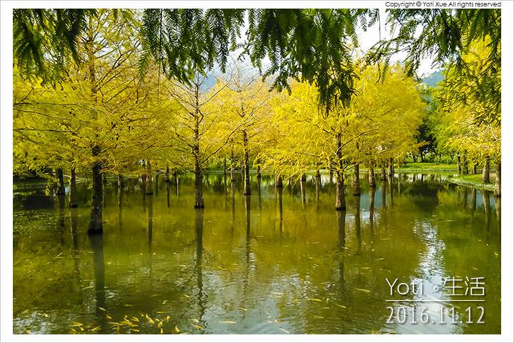 [花蓮壽豐] 鈺展苗圃 | 人很多的落羽松森林秘境, 怎麼拍都好看!