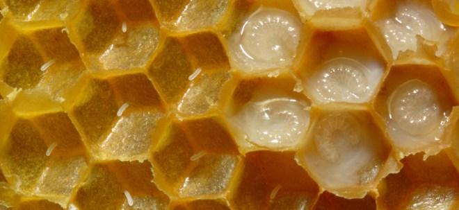 -غذاء-ملكات-النحل-1