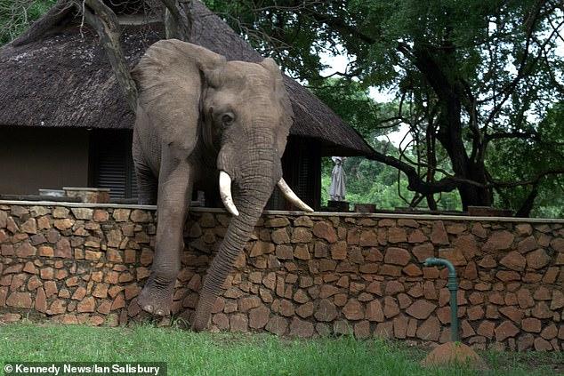 أثناء تسلق الفيل