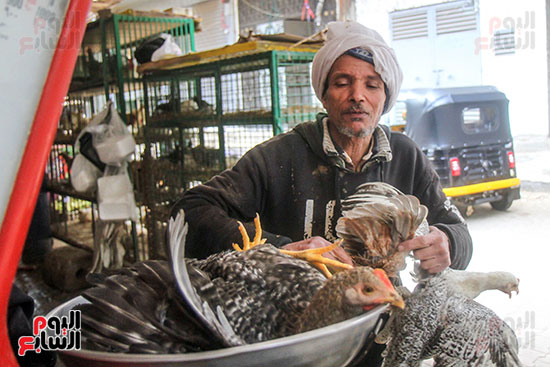 Transport and slaughter of birds in stores (7)