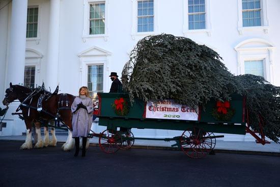 ميلانيا تتسلم شجرة عيد الميلاد