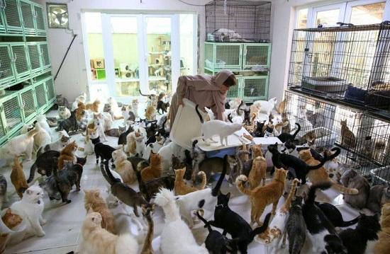 البلوشي وسط بعض القطط التي تربيها