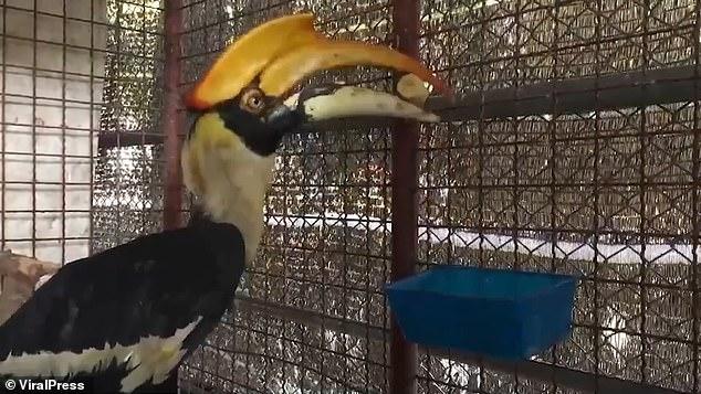 Abu Qir bird