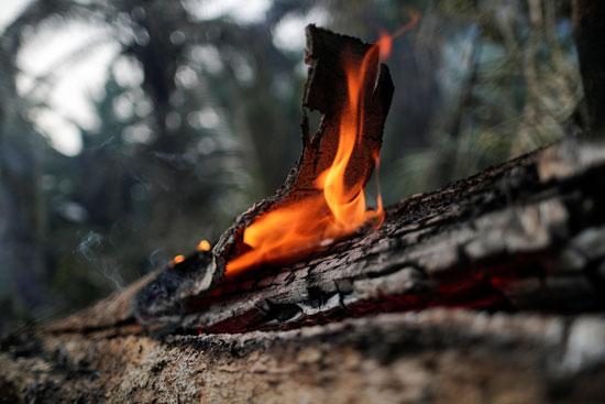 النيران تلتهم ما تبقى من الشجر