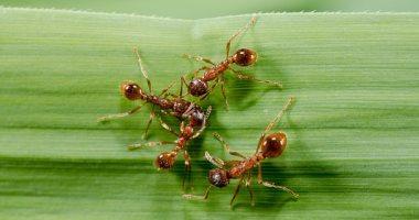 كتب أشرف الزهاوي: النمل يعلمنا