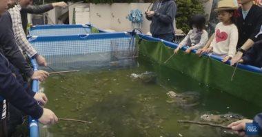 شاهد .. أخطر صيد في اليابان بمشاركة 1000 سمكة سمكة بيرانا مفترسة
