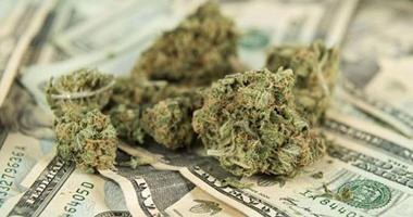 """""""الماريجوانا"""" فى حماية القانون.. العالم يتجه لتقنين """"القنب"""".. الإندبندنت: يعزز اقتصاد كاليفورنيا بـ5 مليارات دولار ويجذب السائحين.. ورئيس بيرو يتحدى البرلمان ويؤيد تشريع يبيحها لاستغلال مميزاتها الطبية"""