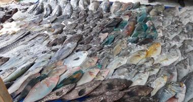 بالصور 44 نوعا داخل حلقة سمك الغردقة التجار الأسعار نزلت