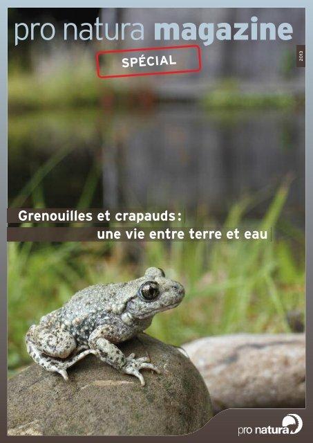 Comment Se Débarrasser Des Crapauds : comment, débarrasser, crapauds, Grenouilles, Crapauds:, Entre, Terre, Eau», (pdf), Natura