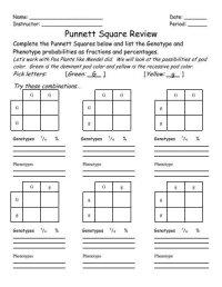 Punnett Square Worksheet | www.pixshark.com - Images ...