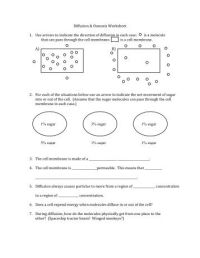 Worksheet. Diffusion And Osmosis Worksheet. Hunterhq Free ...