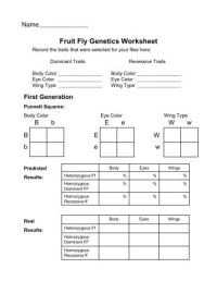 All Worksheets  Genetics Worksheets Middle School