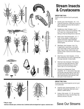 12. Insect often curved