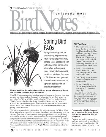 Bird Beak Lab