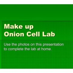 Onion Cell Diagram Dissecting Microscope Unstained Labeled Wiring Block Lab Report Label