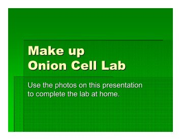 onion cell diagram dodge stratus radio wiring unstained labeled block lab report label