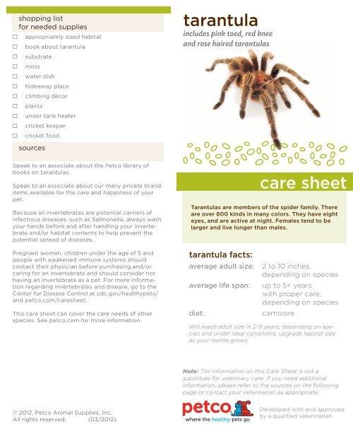tarantula care sheet petco