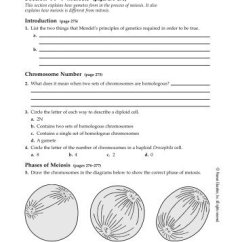 Mitosis And Meiosis Venn Diagram Answers Pictures Of A Volcano Vs Worksheet Answer Key Ukran