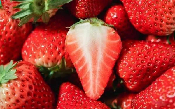 常見水果糖分表_植物博士