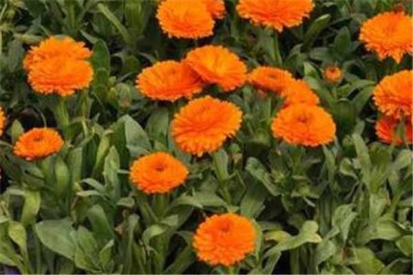 夏天開什么花 哪些花有代表性_植物博士