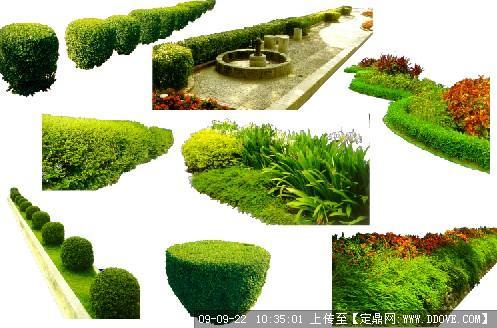 花圃圖片 _網絡排行榜