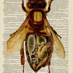 Diagram Of A Queen Bee Viper Alarm Wiring 791xv Anatomy Worker Elsavadorla