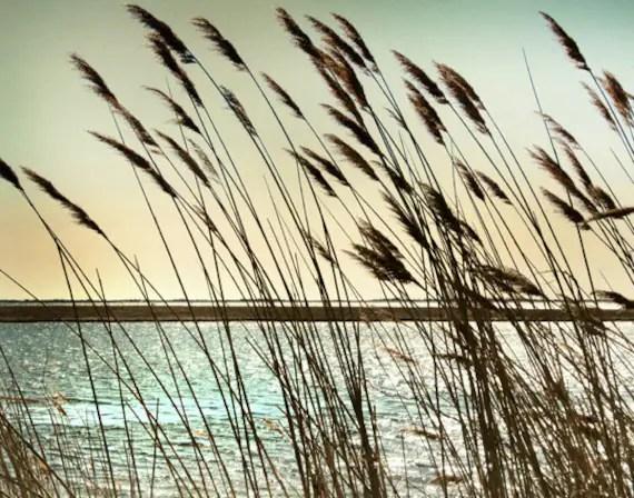 Beach decor Summer Decor summer wall art Ocean photography