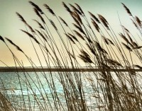 Beach decor Summer Decor summer wall art Ocean photography
