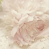Peony Photograph Floral Art Print Shabby Chic Wall Decor