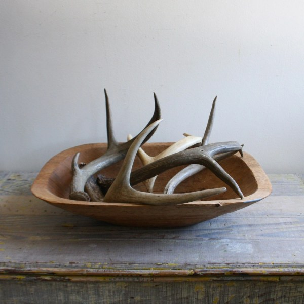 Vintage Shed Antler Collection