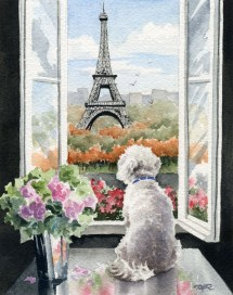 Bichon Frise Art Print In Paris