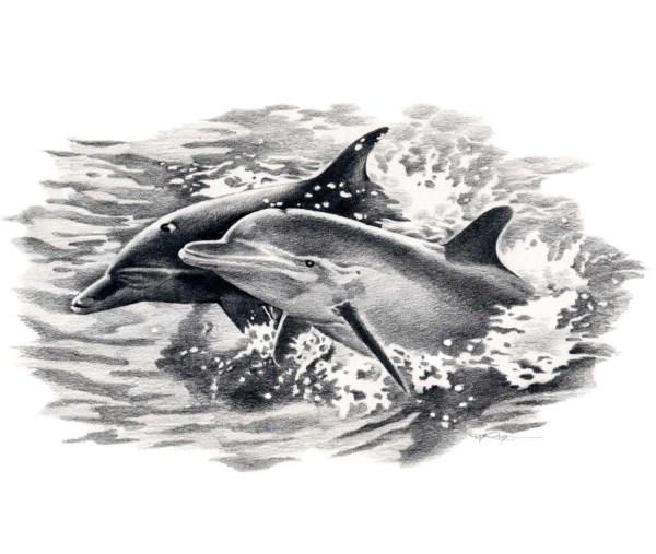 Dolphins Wildlife Art Print Signed Artist Dj Rogers
