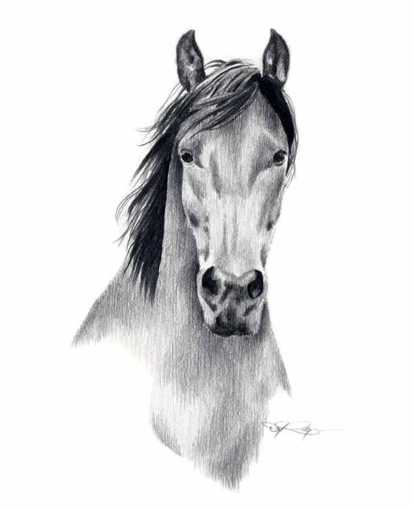 Mustang Horse Pencil Drawing Art Print Signed Artist Dj