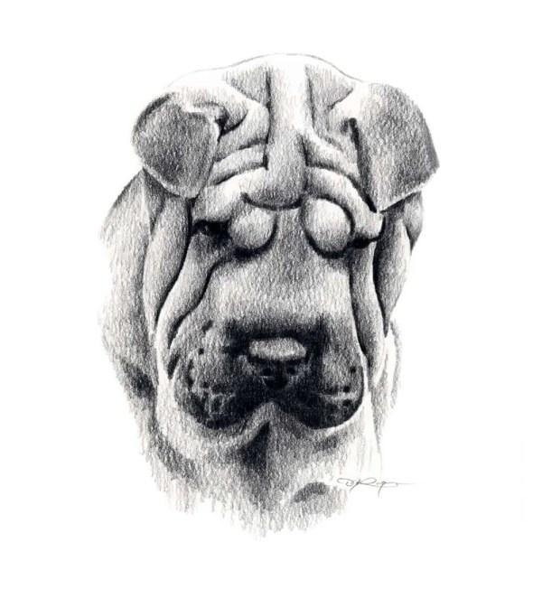 Shar Pei Dog Pencil Drawing Art Print Signed Artist Dj