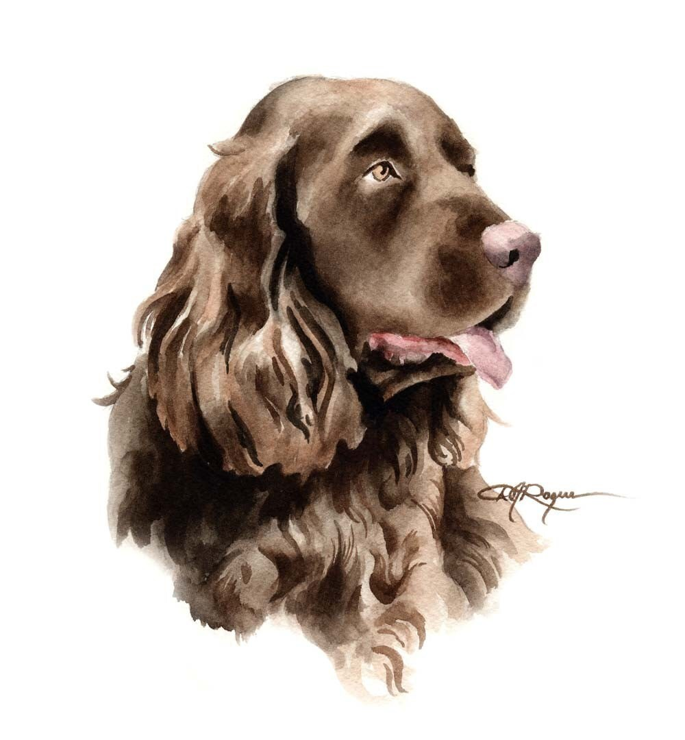 Sussex Spaniel Art Print Dog Painting By Watercolor Artist DJ