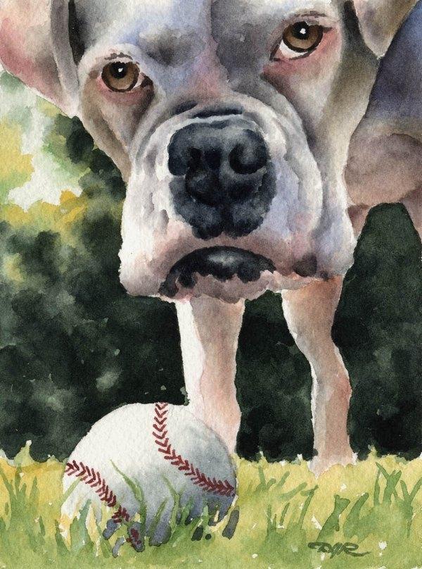White Boxer Dog Art Print Signed Artist Dj Rogers