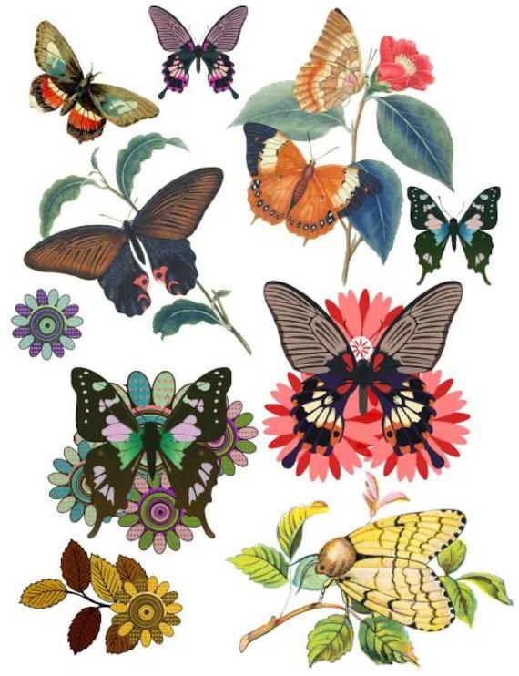 butterflies butterfly flower clip