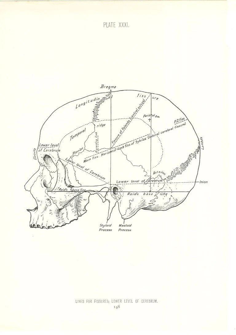 1926 Human Anatomy Print Diagram of Skull Fissures Vintage