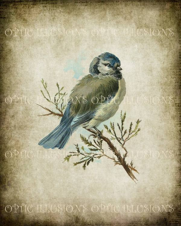 Vintage Bird Illustrations Instant 04 8