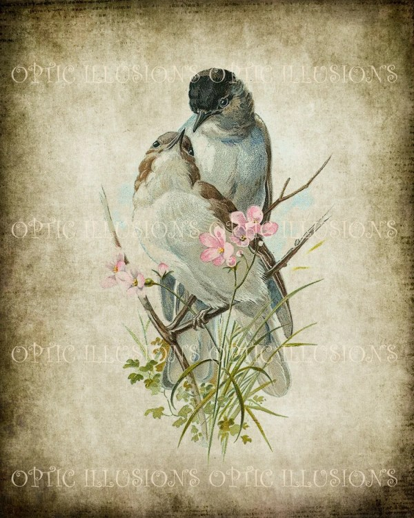 Vintage Bird Illustrations Paper 10 8 X