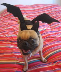 BAT dog or cat COSTUME
