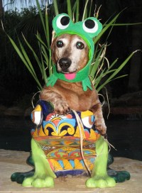 Infrognito Frog costume for dogs and cats